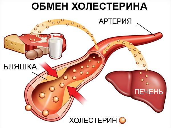 холестерин норма у женщин по возрасту 65